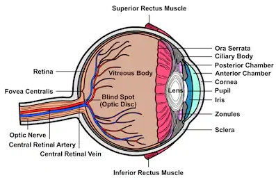 Human eye-phy Form Four